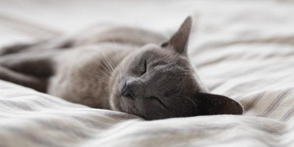 Benefits of 8 hours of sleep